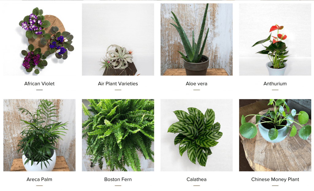 Home-Plants-Brooklyn-Plantology-1