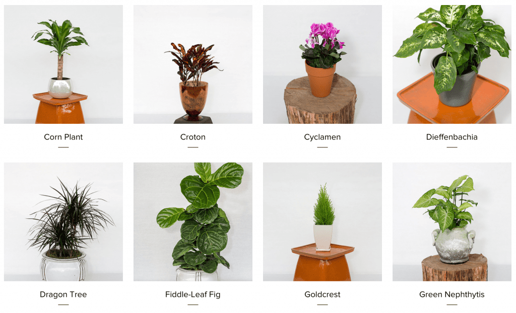 Home-Plants-Brooklyn-Plantology-2