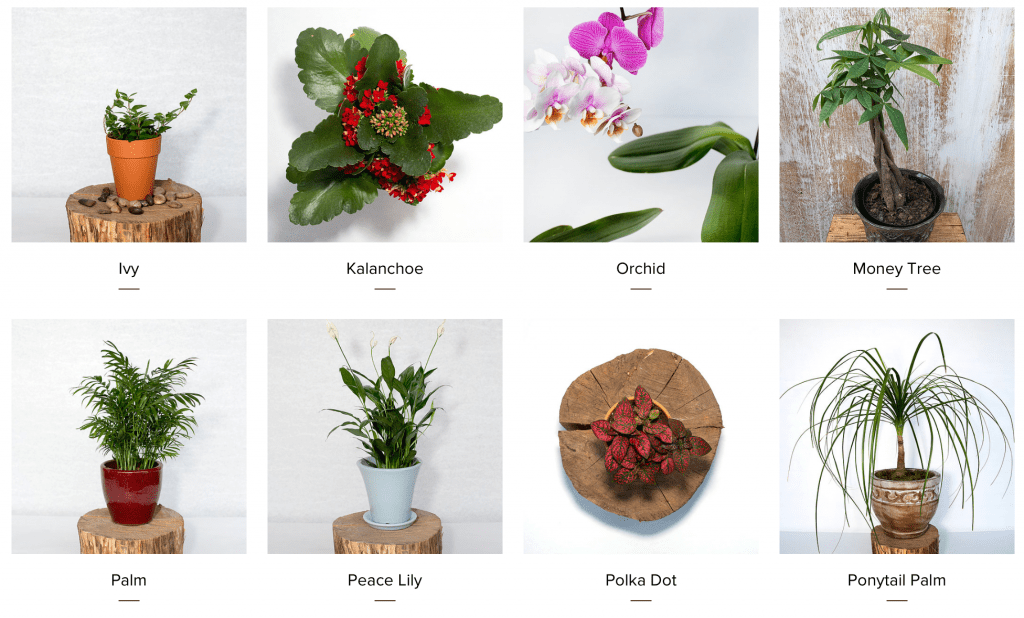 Home-Plants-Brooklyn-Plantology-3