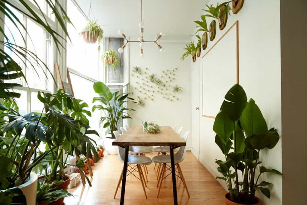 Home-Gardening-Plants-Store-Brooklyn